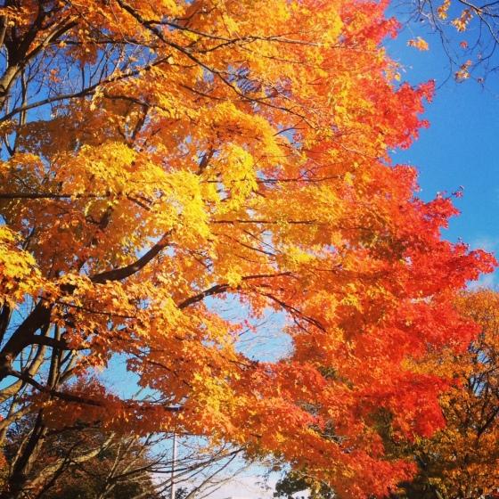 Mid-Fall
